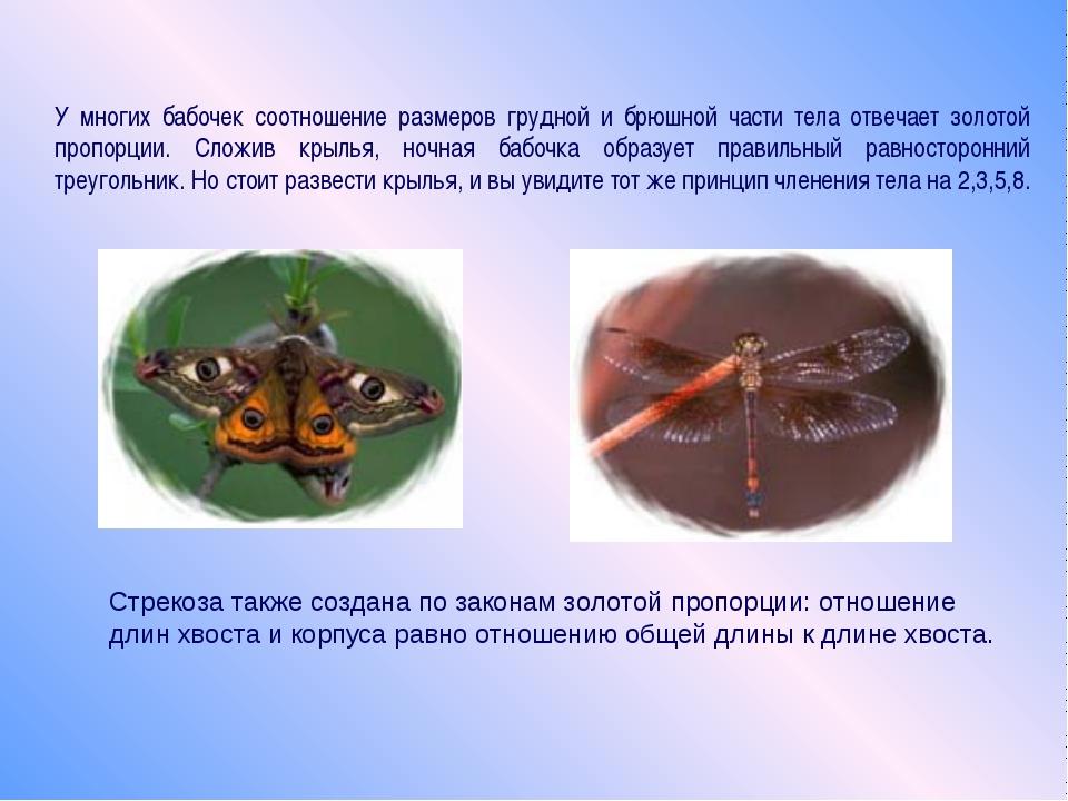 У многих бабочек соотношение размеров грудной и брюшной части тела отвечает з...