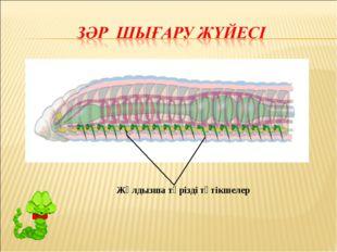 Жұлдызша тәрізді түтікшелер