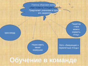 Учитель объясняет материал. «Как помочь птицам зимой» Предлагает ученикам в