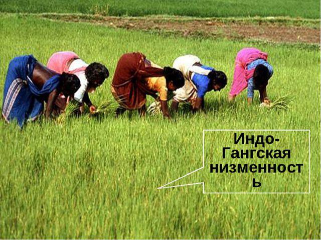 Индо-Гангская низменность