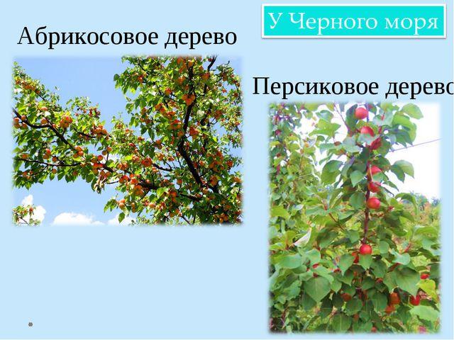 Абрикосовое дерево Персиковое дерево