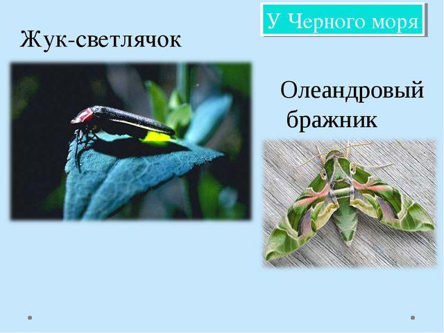 Жук-светлячок Олеандровый бражник У Черного моря