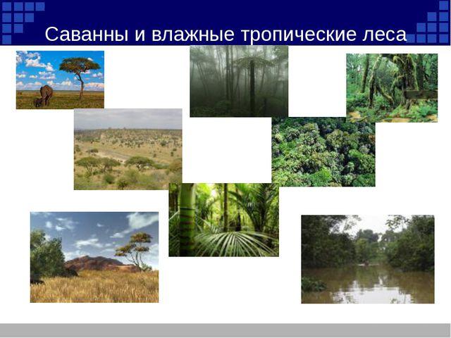Саванны и влажные тропические леса