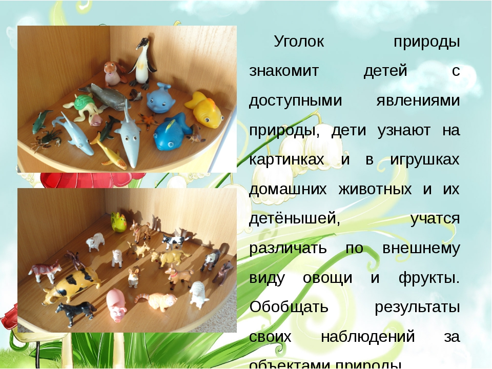 Уголок природы знакомит детей с доступными явлениями природы, дети узнают на...
