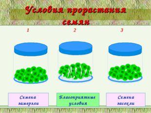 Условия прорастания семян 1 2 3 Семена замерзли Благоприятные условия Семена