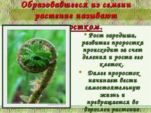 Образовавшееся из семени растение называют проростком. Рост зародыша, развити