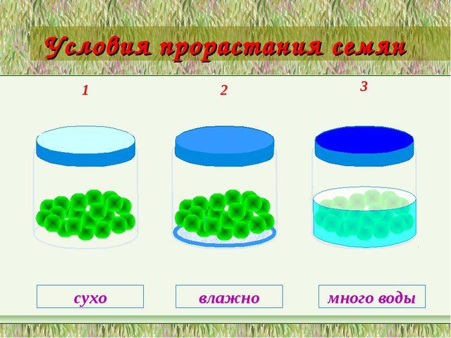 Условия прорастания семян 1 2 3 сухо влажно много воды
