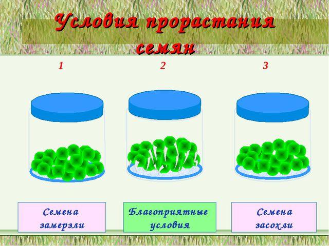 Условия прорастания семян 1 2 3 Семена замерзли Благоприятные условия Семена...
