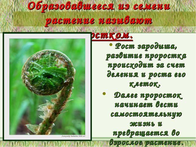 Образовавшееся из семени растение называют проростком. Рост зародыша, развити...