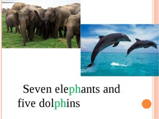 Seven elephants and five dolphins