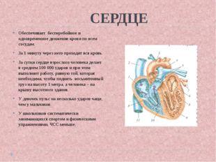 СЕРДЦЕ Обеспечивает бесперебойное и одновременное движение крови по всем сос