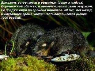 Выхухоль встречается в водоёмах (реках и озёрах) Воронежской области, и являе