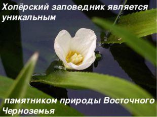 Хопёрский заповедник является уникальным памятником природы Восточного Черноз
