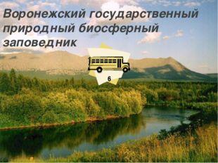 Воронежский государственный природный биосферный заповедник 6
