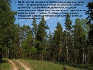 На 35 тысячах гектаров сочетаются разнообразные типы леса — от сухих боров до