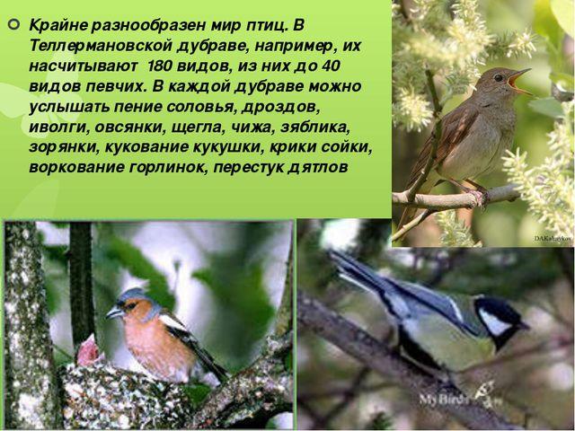 Крайне разнообразен мир птиц. В Теллермановской дубраве, например, их насчиты...