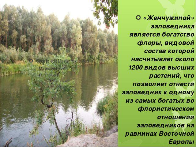 «Жемчужиной» заповедника является богатство флоры, видовой состав которой нас...