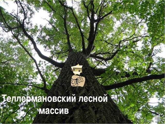 Теллермановский лесной массив 1