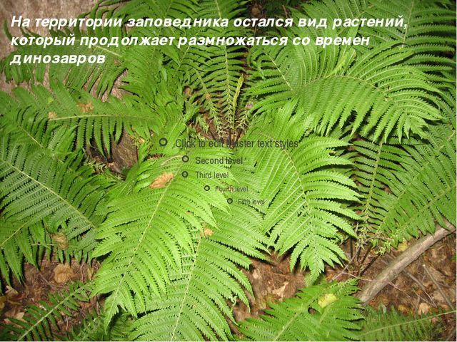 На территории заповедника остался вид растений, который продолжает размножать...