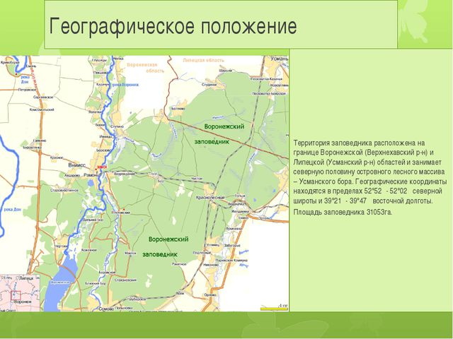 Географическое положение Территория заповедника расположена на границе Вороне...