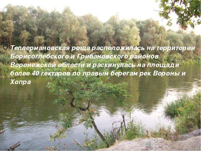 Теллермановская роща расположилась на территории Борисоглебского и Грибановс...