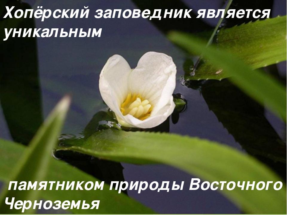 Хопёрский заповедник является уникальным памятником природы Восточного Черноз...