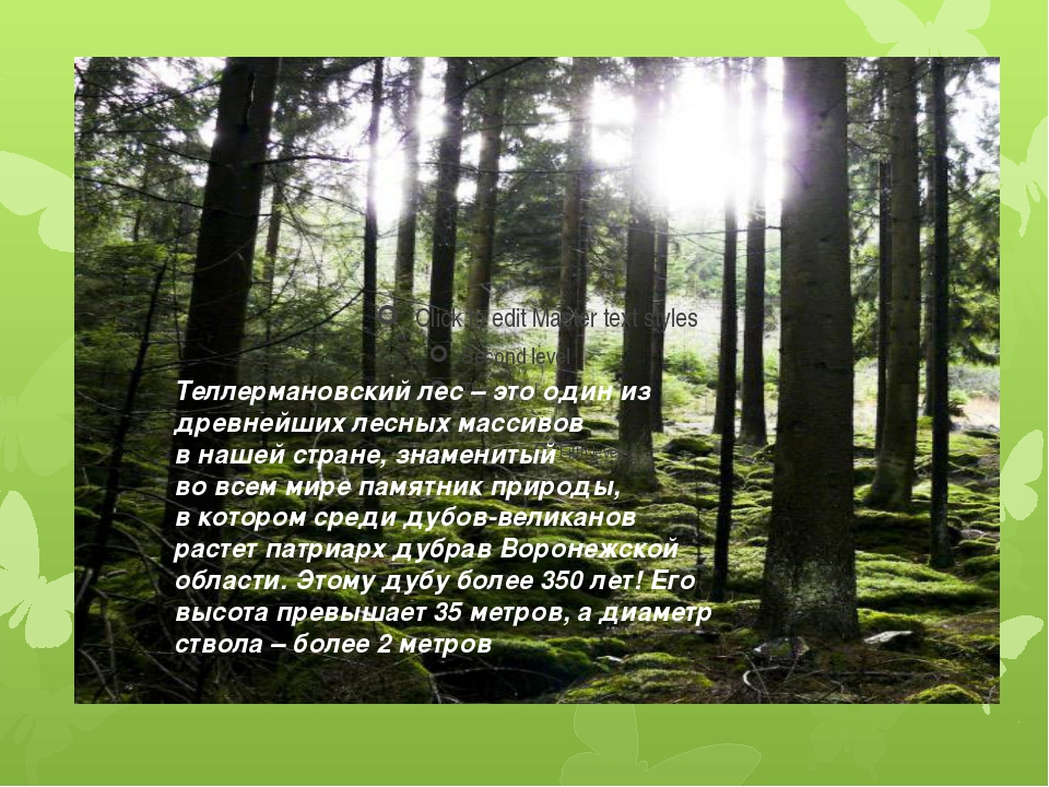 Теллермановский лес – это один из древнейших лесных массивов в нашей стране,...