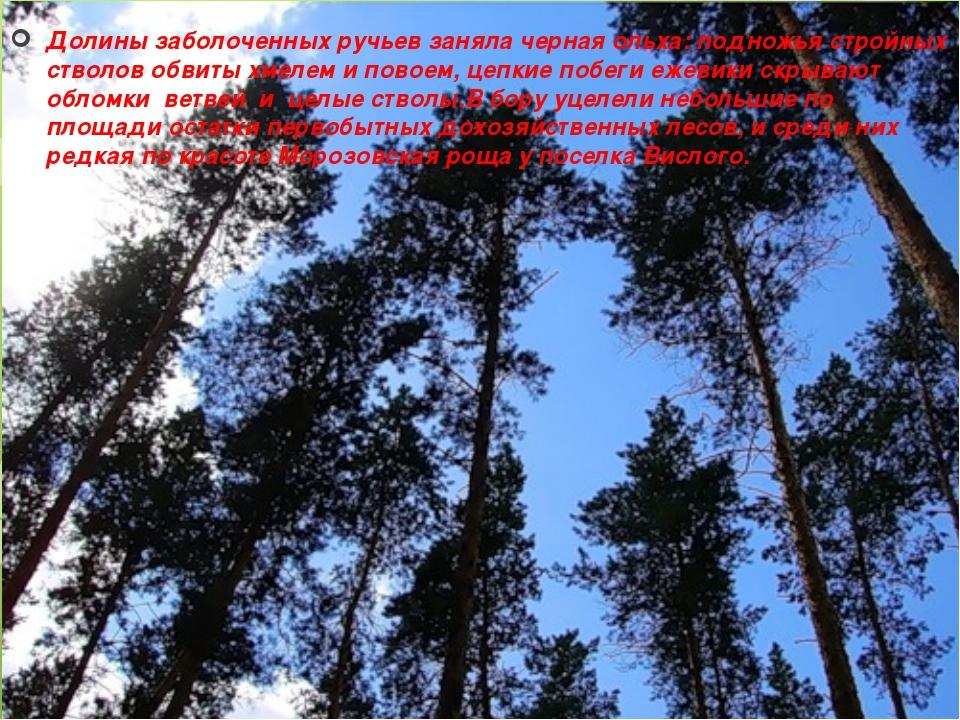Долины заболоченных ручьев заняла черная ольха: подножья стройных стволов обв...