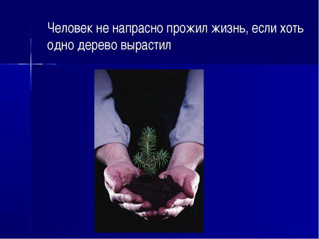 Человек не напрасно прожил жизнь, если хоть одно дерево вырастил