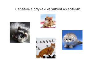 Забавные случаи из жизни животных.