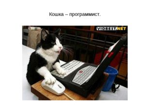 Кошка – программист.