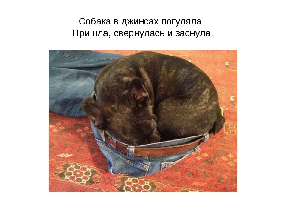 Собака в джинсах погуляла, Пришла, свернулась и заснула.