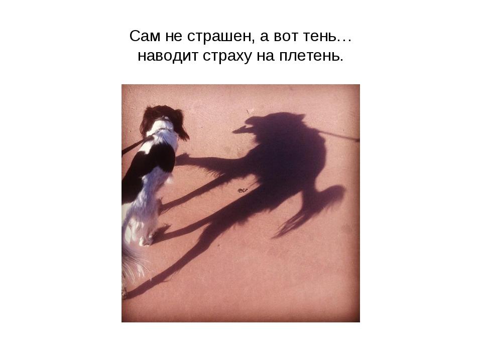 Сам не страшен, а вот тень… наводит страху на плетень.