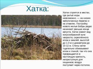 Хатка: Хатки строятся в местах, где рытьё норы невозможно,— на низких забол