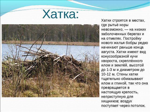Хатка: Хатки строятся в местах, где рытьё норы невозможно,— на низких забол...