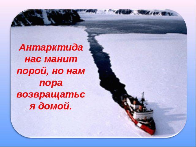 Антарктида нас манит порой, но нам пора возвращаться домой.