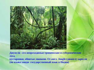 Джунгли –это непроходимые тропические и субтропические леса, кустарники, обви