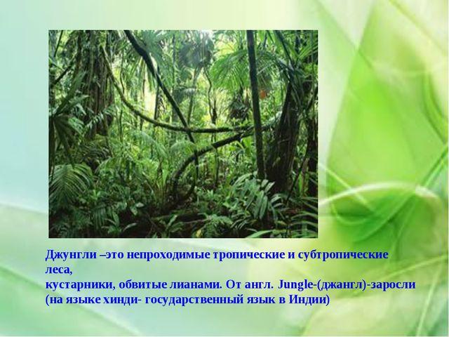 Джунгли –это непроходимые тропические и субтропические леса, кустарники, обви...