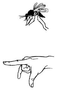 Пальчиковая гимнастика для развития речи дошкольников