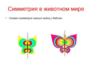 Симметрия в животном мире Осевая симметрия хорошо видна у бабочек