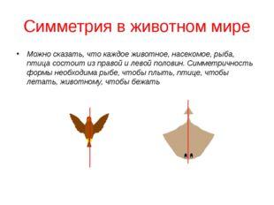 Симметрия в животном мире Можно сказать, что каждое животное, насекомое, рыба