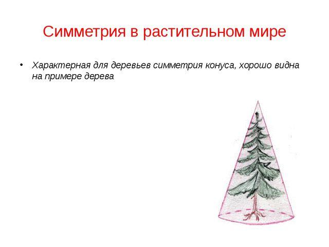 Симметрия в растительном мире Характерная для деревьев симметрия конуса, хоро...