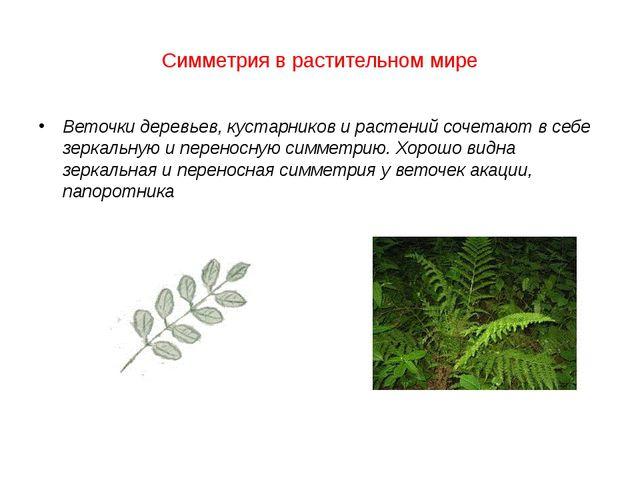 Симметрия в растительном мире Веточки деревьев, кустарников и растений сочет...