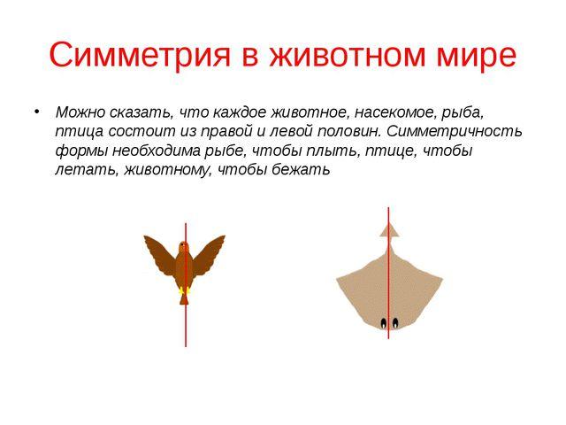 Симметрия в животном мире Можно сказать, что каждое животное, насекомое, рыба...