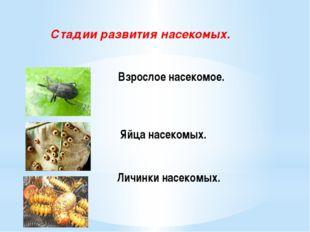 Взрослое насекомое. Яйца насекомых. Личинки насекомых. Стадии развития насек
