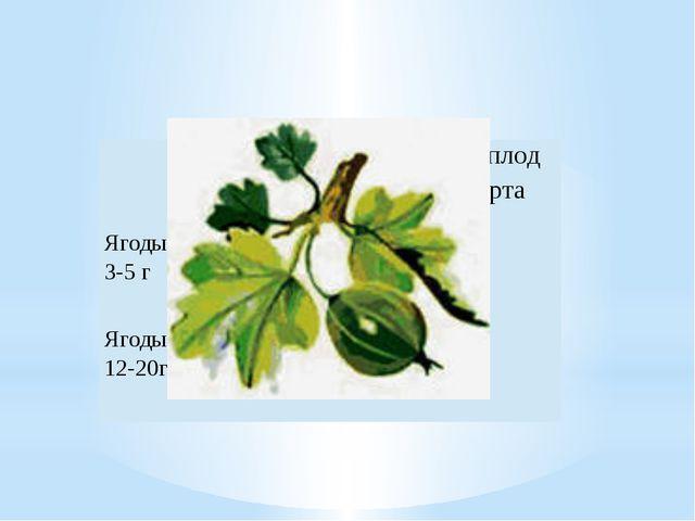 Крупноплодные сорта  Мелкоплод ныесорта Ягоды массой 3-5 г    + Ягоды...