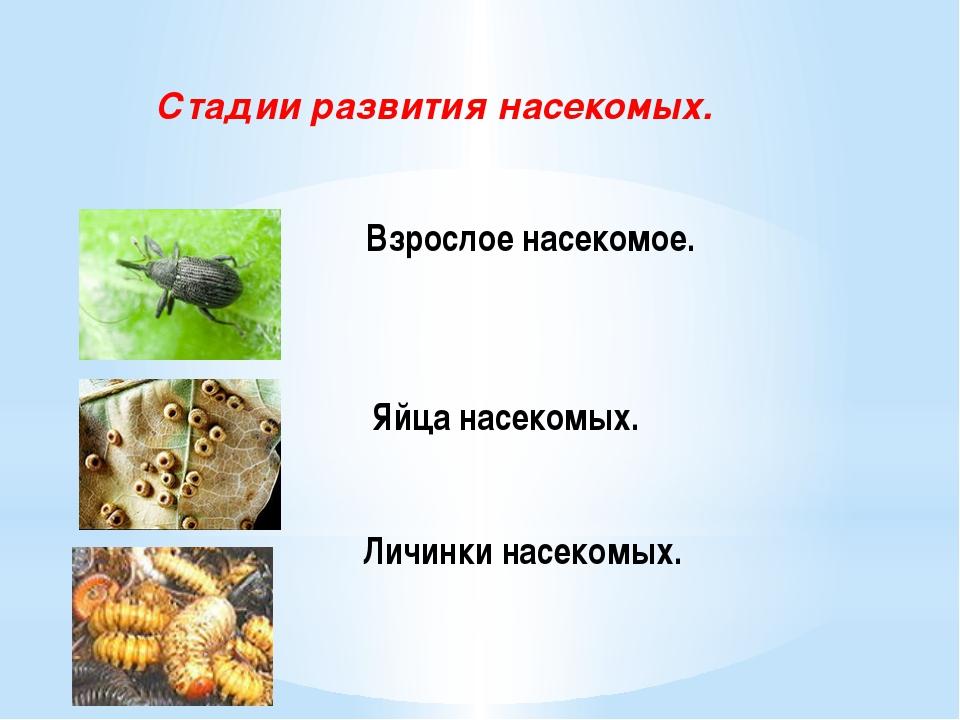 Взрослое насекомое. Яйца насекомых. Личинки насекомых. Стадии развития насек...