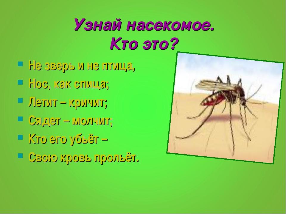 Узнай насекомое. Кто это? Не зверь и не птица, Нос, как спица; Летит – кричит...