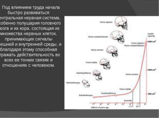 Под влиянием труда начала быстро развиваться центральная нервная система, ос