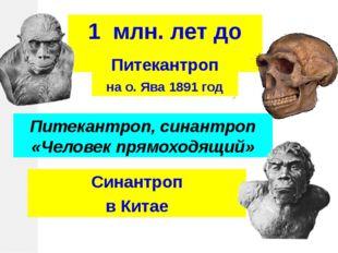 Питекантроп, синантроп «Человек прямоходящий» 1 млн. лет до н.э. Питекантроп